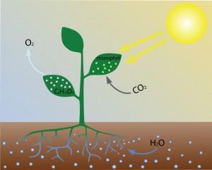 biocarburants, pétrole, C02, micro-algues, énergie solaire