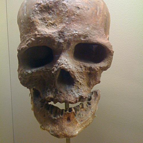 Mammuthus primigenius, mamouth, Changis-sur-Marne, archéologie, silex, neandertaliens