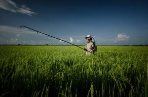 Sénat, pesticides, produits phytosanitaires, agriculture, perturbateurs endocriniens