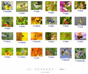 Biodiversité, ville, nature, Gaz, citoyenneté