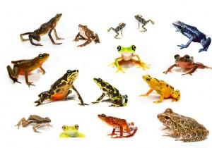 biodiversité, écosystèmes, patrimoine, chercheurs