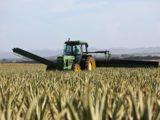Un tracteur dans un champ de blé