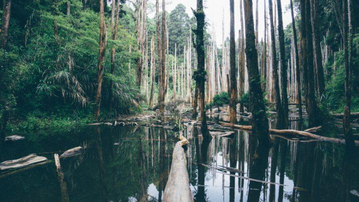l'Amazonie, poumon de la planète