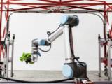 Aux Etats Unis, la première ferme robotisée sans terre ni saisons est opérationnelle depuis moins d'un an. Elle a été conçue par Iron Ox, une start-up américaine installée à San Carlos au cœur de la Silicon Valley (Californie).