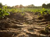 Le sol d'une exploitation agricole aux Pays Bas.