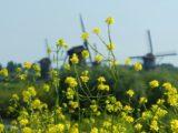 EELV victoire historique de l'écologie aux municipales