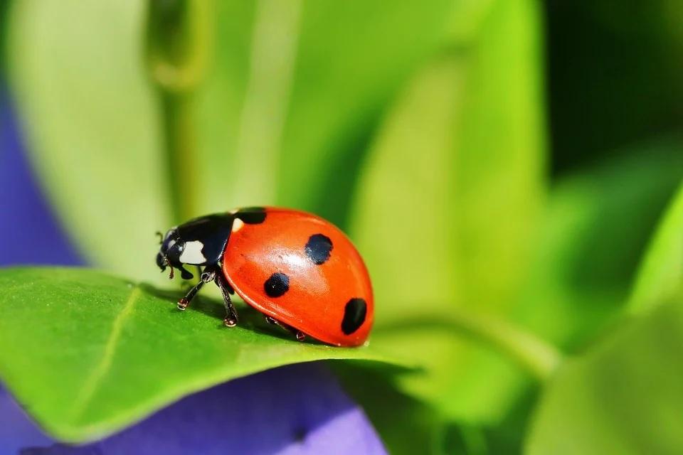 robot espionner insectes