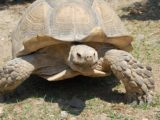 robot tortue chasse dechets
