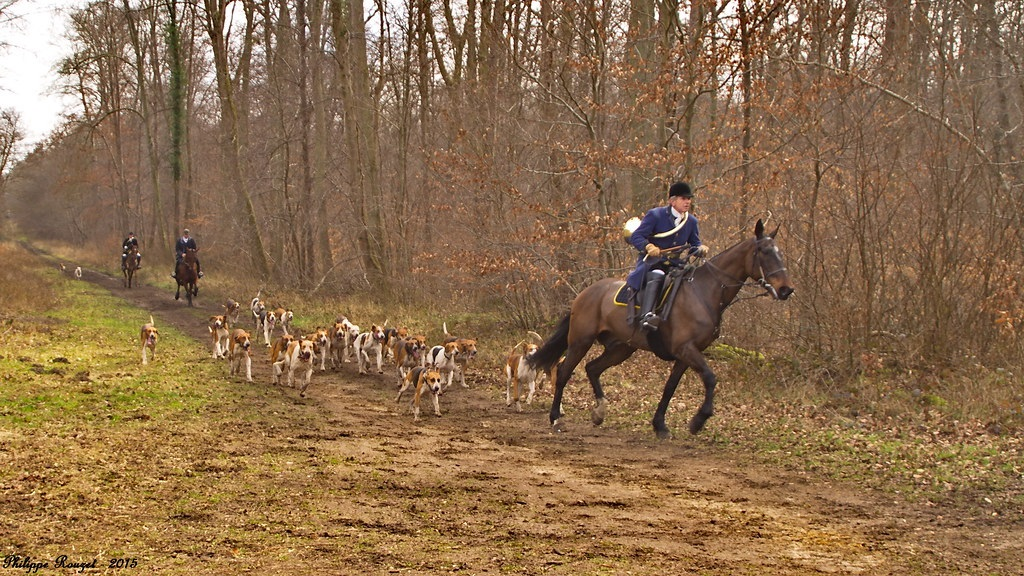 chasse a courre