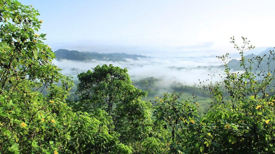 non retour foret Amazonienne