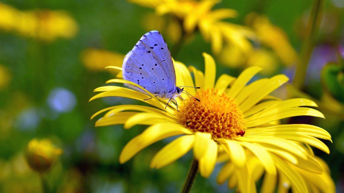 papillons colores dereglement climatique
