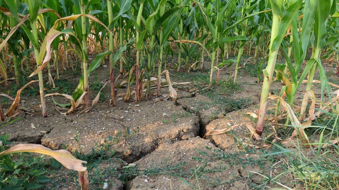 rechauffement agriculture zones tropicales