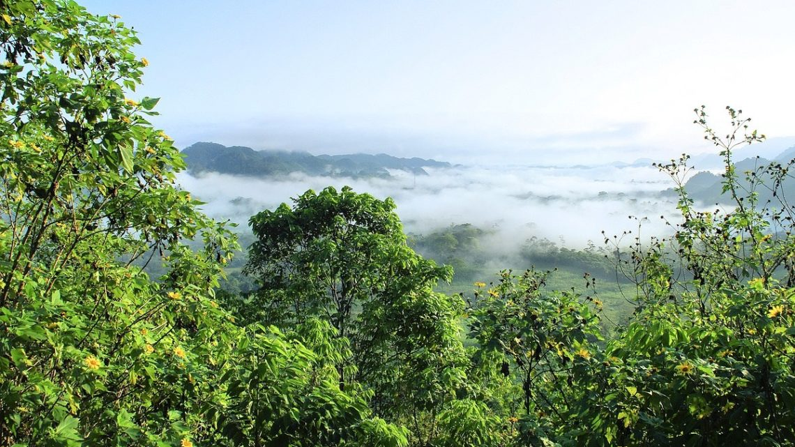 Amazonie deforestation Espagne