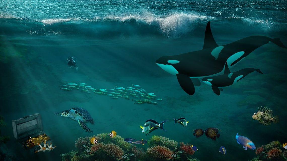 orques danger