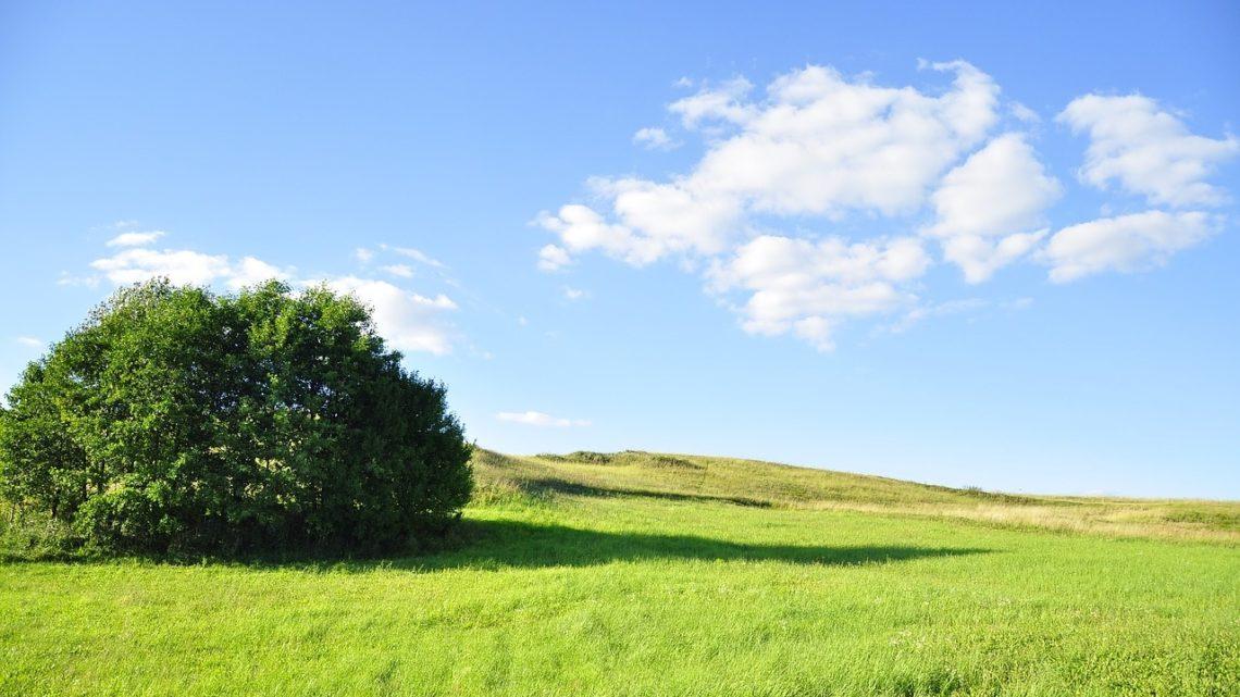 cinq bonnes nouvelles environnement