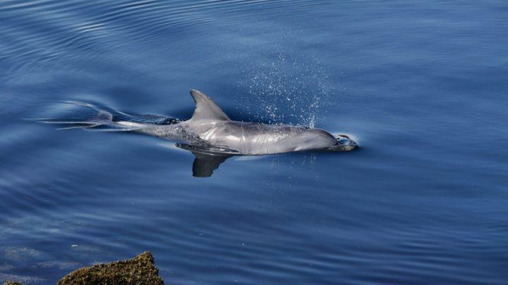 maladie mortelle dauphins rechauffement