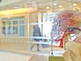 Un modèle transparent. d'un crâne humain.