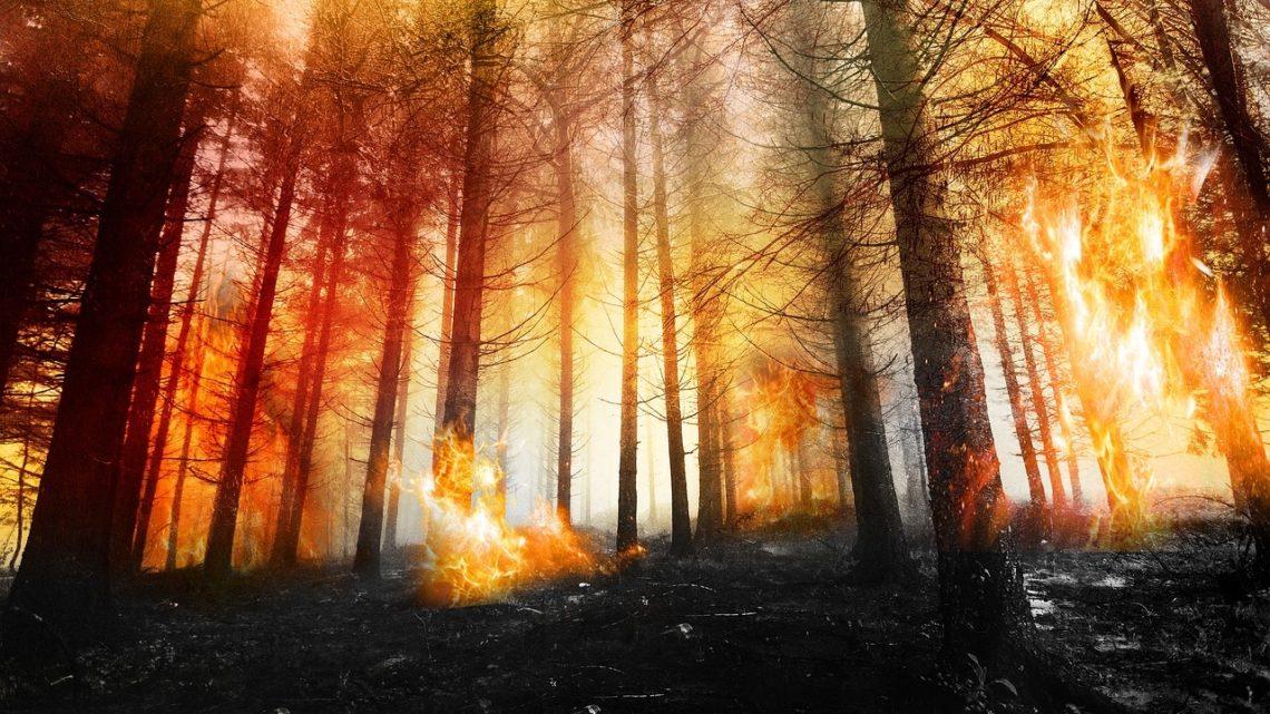 surface pays-bas ravage incendies tronconneuse