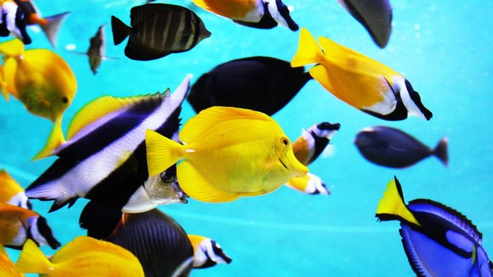 poissons eaux equatoriales rechauffement